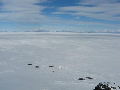 Weddell seals at Hut Point